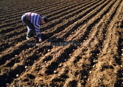 Costas_Dumitrescu - Perspectiva agrara - Suciu de Jos