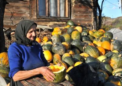 Felician_Sateanu - Colectarea semintelor de dovleac - Libotin