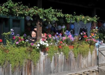 Felician_Sateanu - Floarea florilor - Saliste