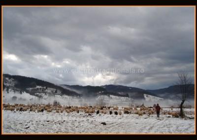 Gheorghe_Petrila - Cioban cu turma